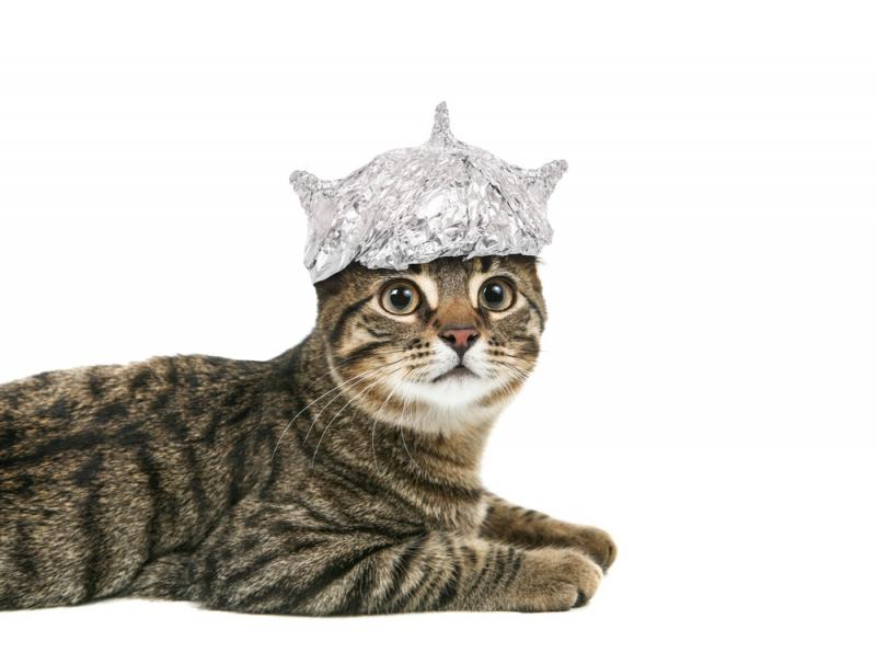 The cat in the (aluminum foil) hat: cyber and other specialty risks to drive ILS growth